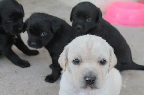 doacoes de cachorros anima mais animais